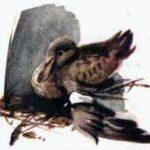 Анюткина утка - Виталий Бианки