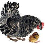 Баба и курица - Лев Толстой