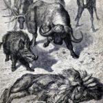 Больной лев - Эзоп