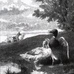 Черепаха и две утки - Жан де Лафонтен