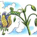 Честное гусеничное - Валентин Берестов