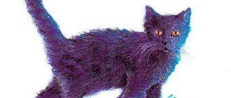 Чёрная кошечка - Еврейская сказка