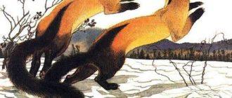 Древесный разбойник - Всеволод Сысоев