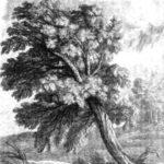Дуб и трость - Жан де Лафонтен