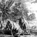 Два быка и лягушка - Жан де Лафонтен