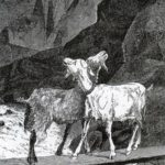 Две козы - Жан де Лафонтен