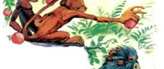 Две обезьянки - Индийская сказка