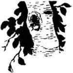 Этажи леса - Михаил Пришвин
