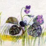 Фиалка - Екатерина Серова