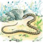 Голова и хвост змеи - Лев Толстой