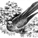 Хитрая птица - Георгий Скребицкий