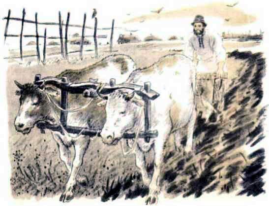 крестьянин пашет землю на волах