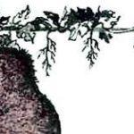 Как медведь виноградник сторожил (Сербская) - Славянская сказка