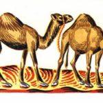 Как верблюды удачу принесли - Африканская сказка