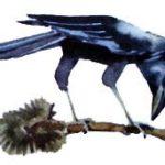 Как ворон землю мерил (Мансийская) - Сказка народов России