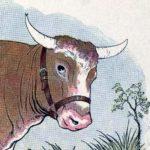 Комар и бык - Эзоп