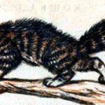 Кошка и лисица - Лев Толстой