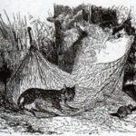 Кошка и мышь - Жан де Лафонтен