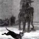Крыса и слон - Жан де Лафонтен