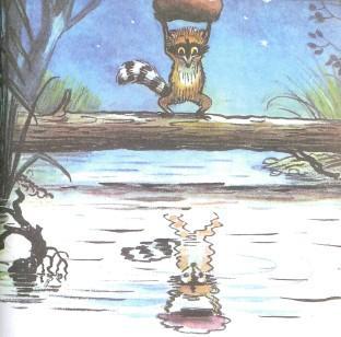 енот бросает камень булыжник в отражение в озере в пруду