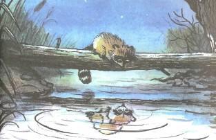 енот на пруду отражение в озере
