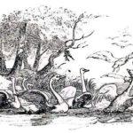 Лебединое гнездо - Ганс Христиан Андерсен