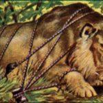 Лев и мышь - Лев Толстой