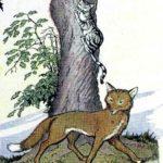 Лиса и кот - Эзоп