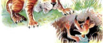 Лиса и тигр - Вьетнамская сказка