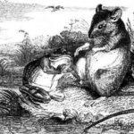 Лягушка и крыса - Жан де Лафонтен
