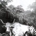 Лягушка и вол - Жан де Лафонтен