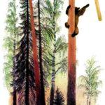 Медведь и бревно - Константин Ушинский