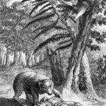 Медведь и два охотника - Жан де Лафонтен