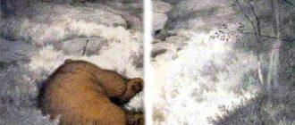 Медведь и лис - Норвежская сказка