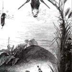 Муха и пчела - Иван Крылов