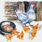 Наседка и цыплята - Лев Толстой