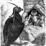 Орел и сова - Жан де Лафонтен