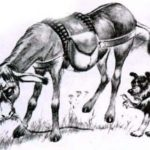 Осел и собака - Жан де Лафонтен