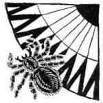 Паук и кибунго - Бразильская сказка