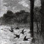 Паук и ласточка - Жан де Лафонтен