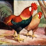 Петух и жемчужина - Эзоп