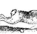 Почему заяц косой? (Донская) - Сказка народов России
