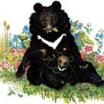 Повесть о гималайском медведе - Всеволод Сысоев