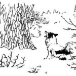 Пропавший медведь - Георгий Скребицкий
