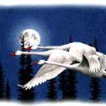 Птицы-феи - Французская сказка