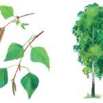 Расскажите детям о деревьях - Мороз В. Бурмистрова Л. - Узнай-ка!