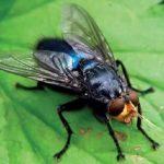 Расскажите детям о насекомых - Емельянова Э. - Узнай-ка!