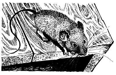 Школьная мышь