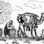 Сын садовника и Кор-оглы