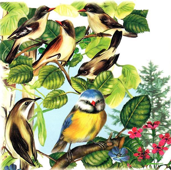Картинки к синичкиному календарю февраль